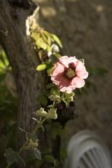 Backlit_flower_mg_1490edit